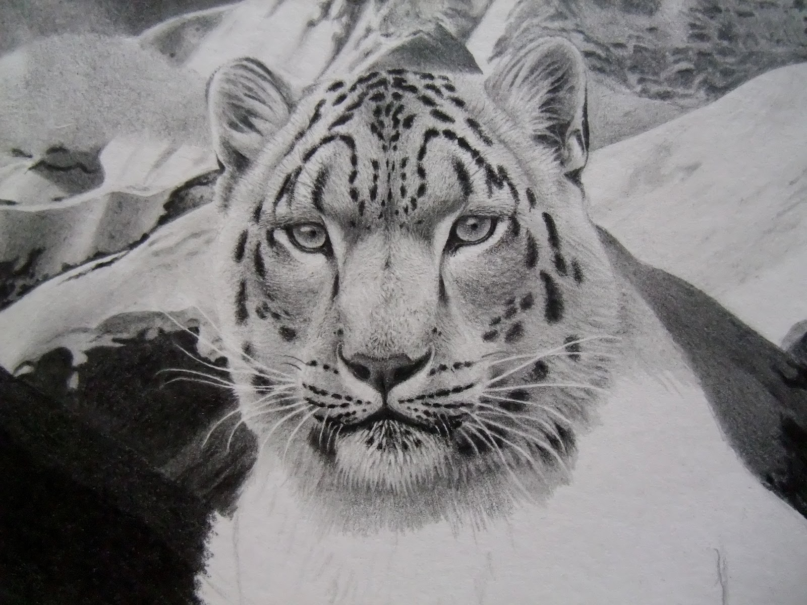 Antoine Roquain Dessin Animalier, Wildlife Pencil Art: avril 2012