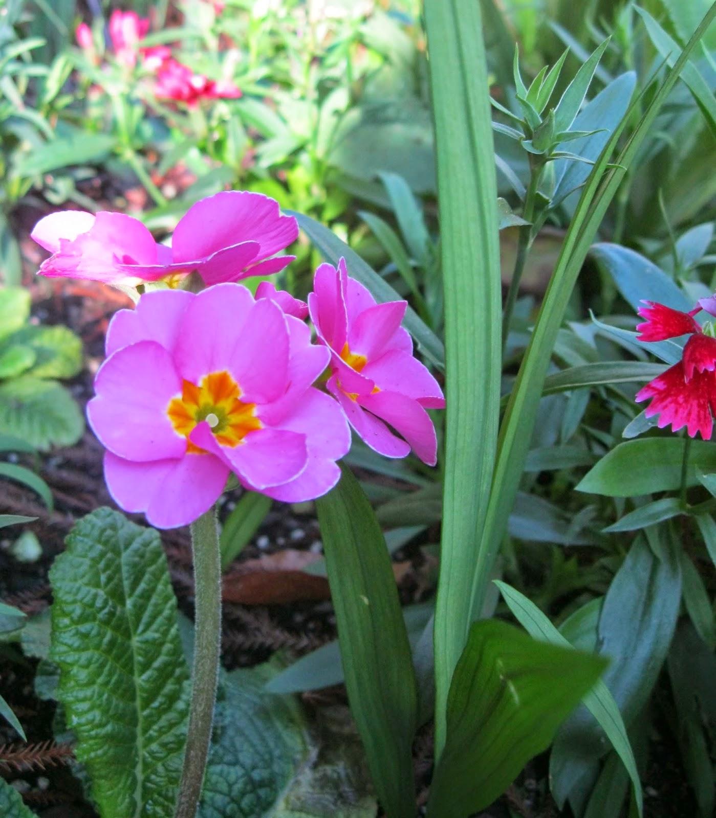 quiltingorchardist gardening