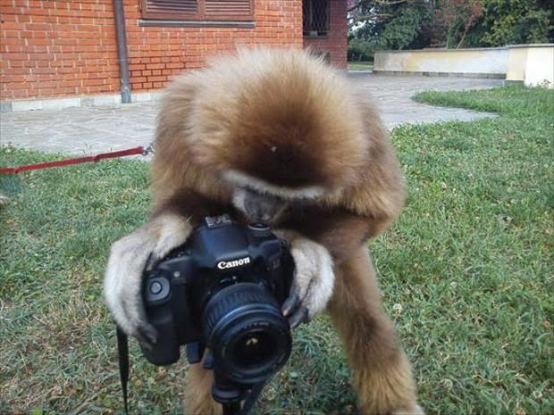 lustiger Affe mit Kamera