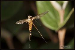 Se acerca esta mosca a su destino