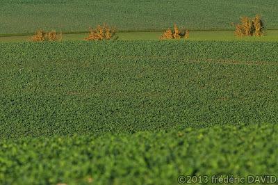 campagne arbres champ automne Seine-et-Marne