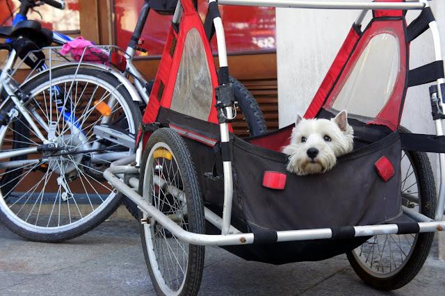 dziecięca przyczepka rowerowa zaadoptowana dla psa