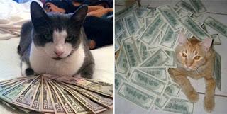 Tumblr - CashCats gatos dinheiro