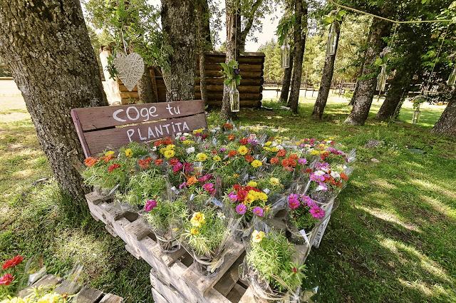 Regala flores y plantas en tu boda