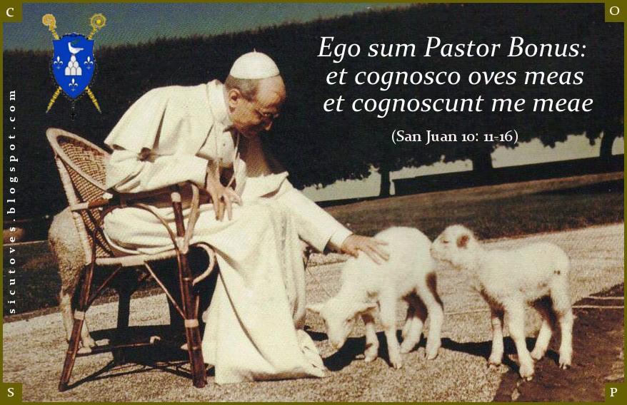 Como ovejas sin Pastor en Facebook