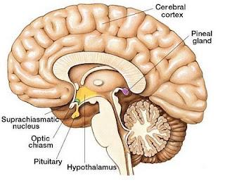 Nueva conciencia activaci 211 n del centro pineal pituitaria