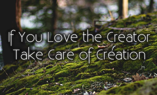 If You Love The Creator, Take Care Of Creation