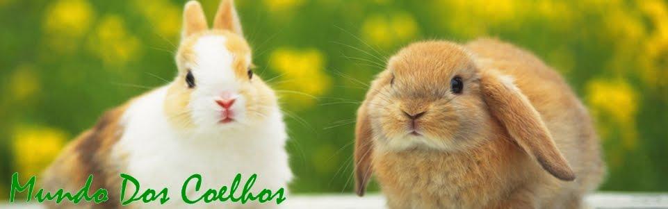Mundo dos coelhos