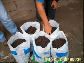 cómo hacer fertilizante casero