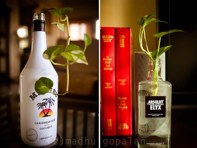 Malibu Coconut Rum Absolut Elyx