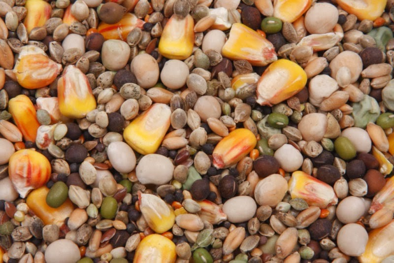 Зерно за 1-2 часа перед