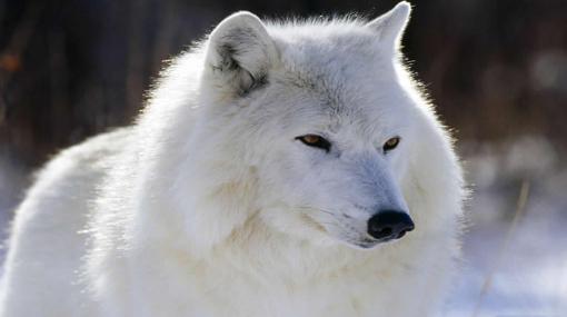 Los 10 animales más hermosos del mundo | Noticias Interesantes del ...