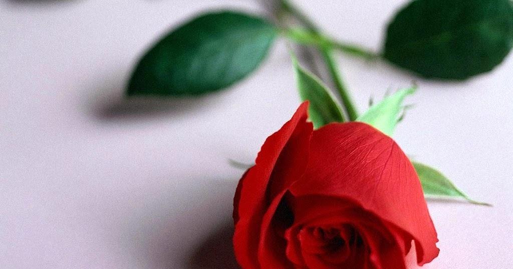 Baño Sencillo Para Atraer El Amor:1024 x 538 jpeg 89kB, Ritual para que tu ex que se olvide de ti