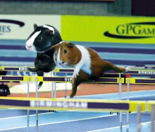 Funny Olympic Animal