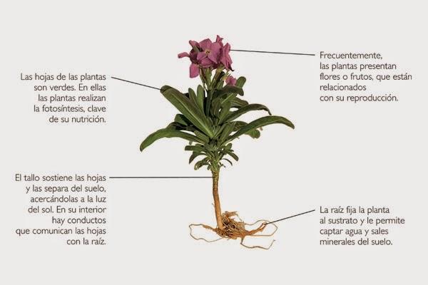 organologia vegetal | biología y sus microorganismos