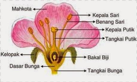 Bunga dan bagian-bagiannya