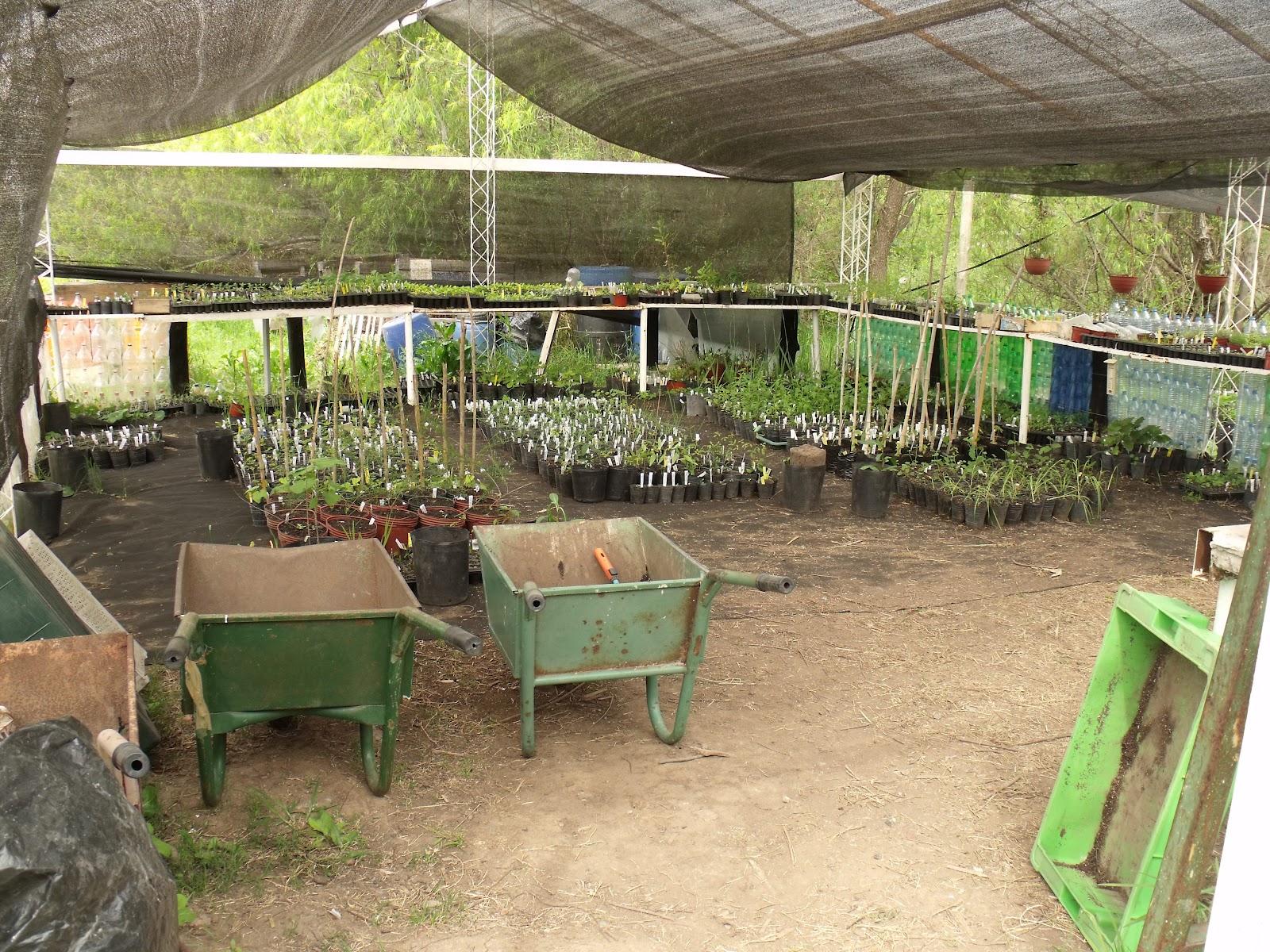 Naturaleza y cultura el vivero de ribera norte for Vivero el ceibo