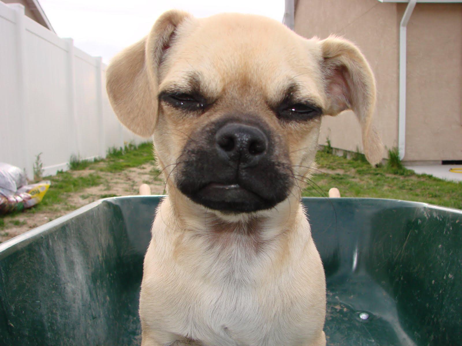 http://1.bp.blogspot.com/-s9-19g-EKR8/TcTRRyCPBII/AAAAAAAAAZ0/2K1PRg_vzgU/s1600/dogs%2B063.JPG
