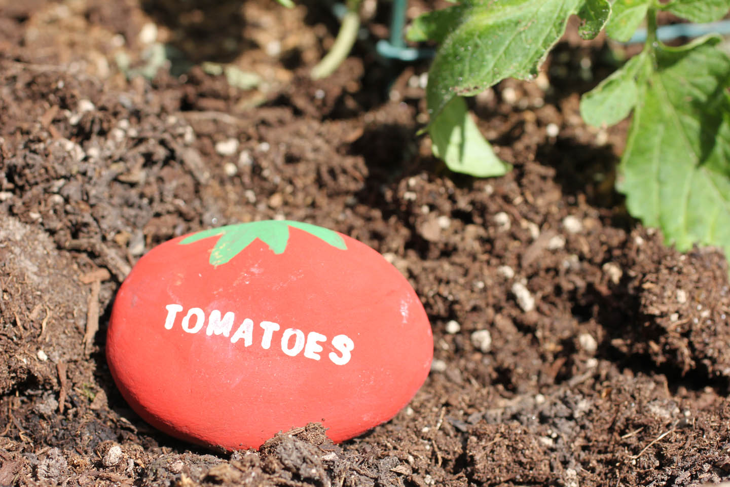 Repeat Crafter Me Vegetable Garden Rock Signs