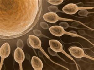 Cientistas desenvolvem esperma (sêmen) em laboratório