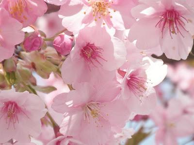 NEWAYS Eurasia встречает весну