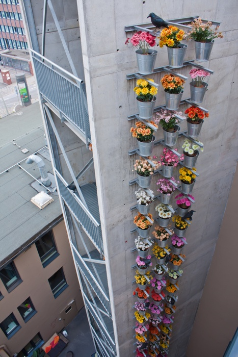 Urban High Rise Gardening
