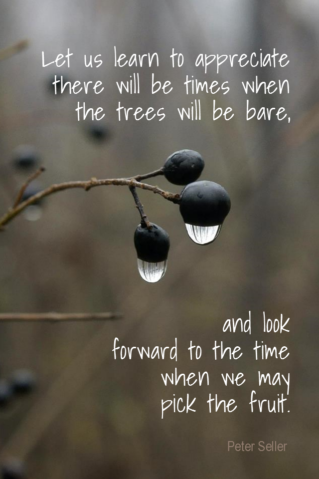 visual quote - image quotation for PATIENCE - Let us learn to appreciate there will be times when the trees will be bare, and look forward to the time when we may pick the fruit.- Peter Seller