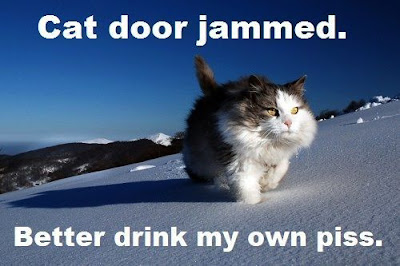 Funniest Pictures of animal
