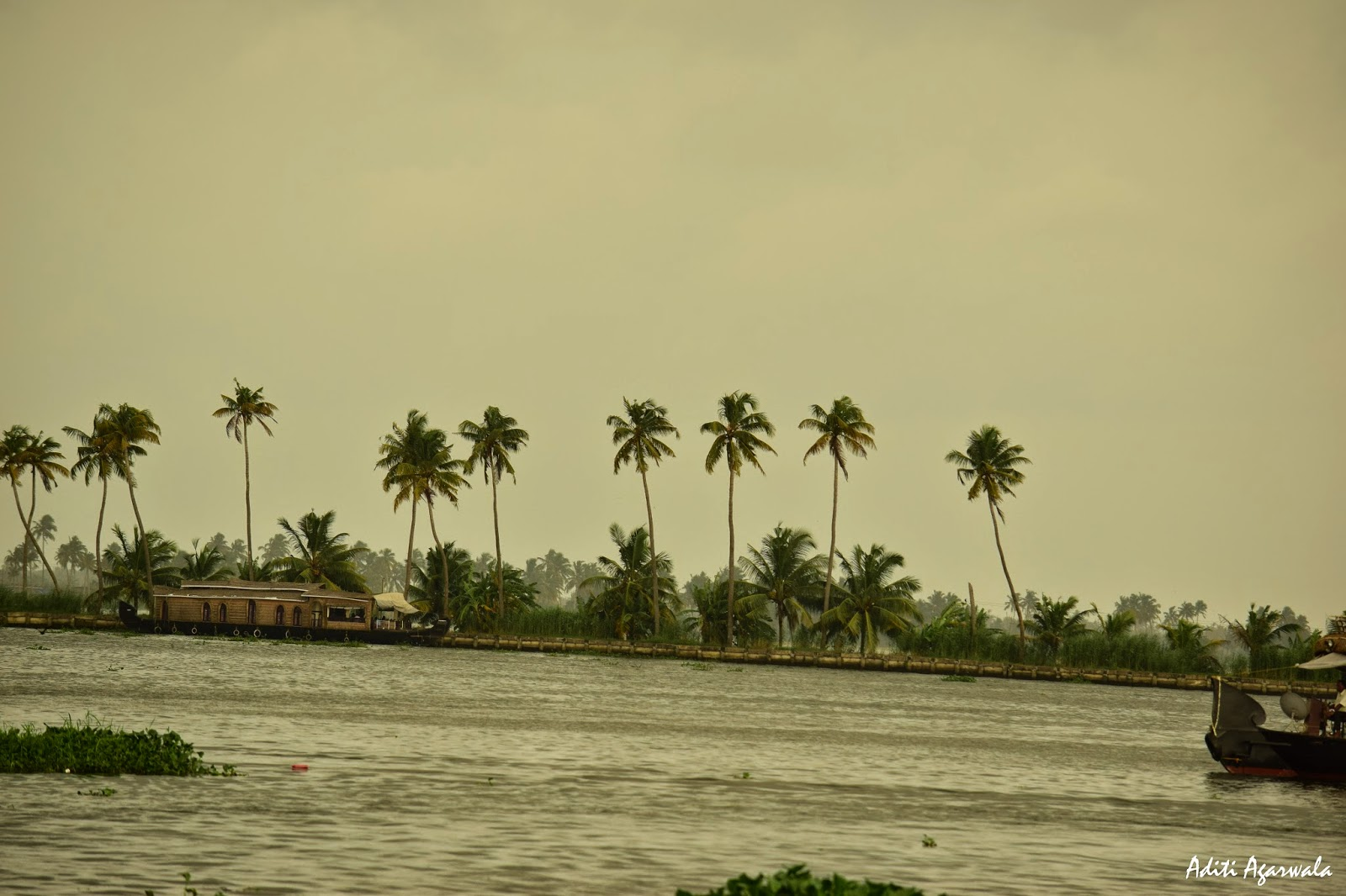 Houseboats sail through the backwaters of Allepey