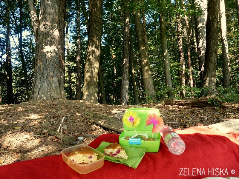 gremo ven - ideje za preživljanje prostega časa z otroki v naravi - gozd