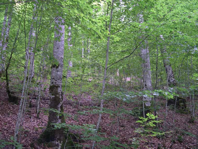 Espectacular Selva de Irati