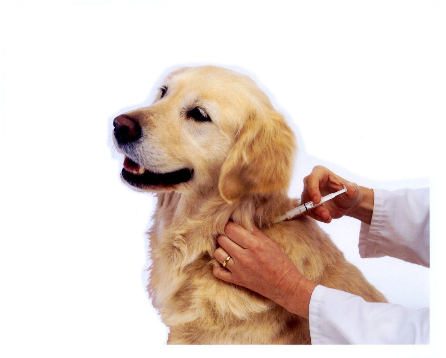 animal clinic nugegoda udahamulla dog vaccines understanding dog vaccines understanding the importance of vaccinations