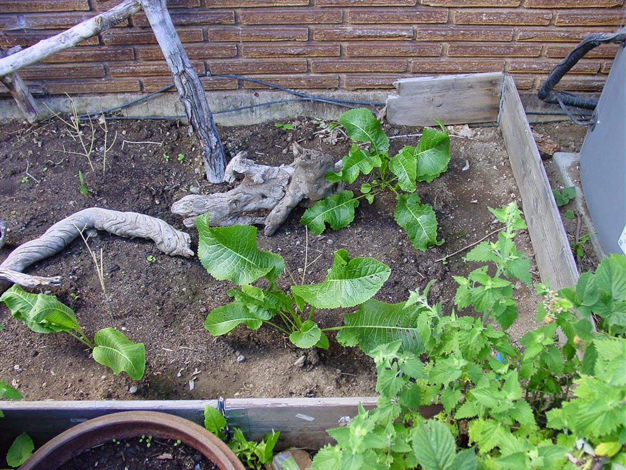 scrap herb bed