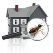 Raleigh Pest Control