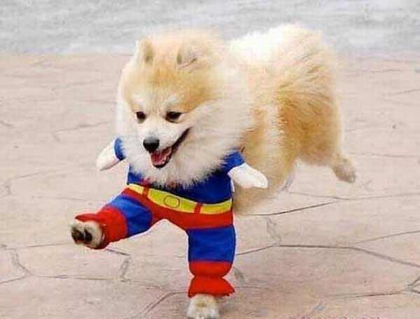 Funny Animals: Funny Super Dogs New Images