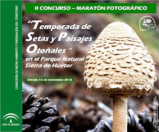 www.juntadeandalucia.es/medioambiente/servtc5/ventana/descargaPublicaciones.do?s=img/Publicaciones/SierraHuetor/&n=ConcursoFotografiaHuetor_2013.pdf