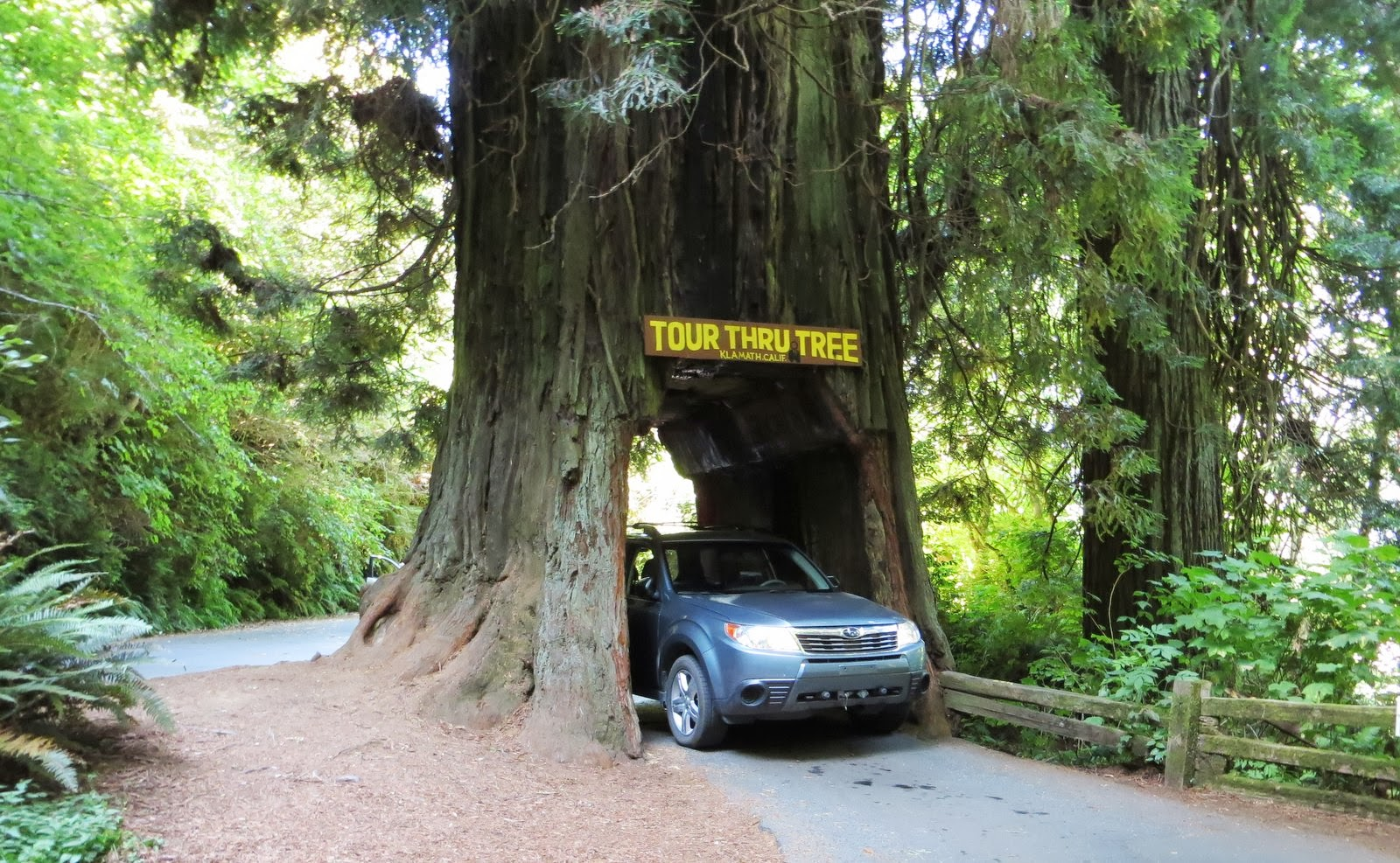 Candy n john rv 2013 july drive through tree this privately owned tourist attraction was created for the benefit of those people who desire the unique experience of driving through arubaitofo Gallery