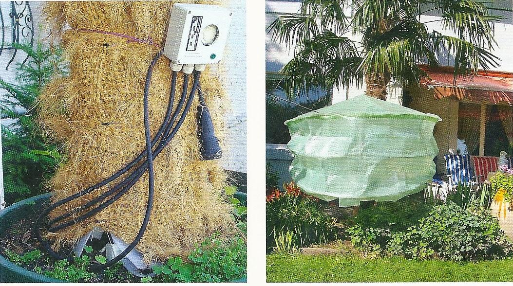 unser steiniger stadtgarten gartenpflanzen richtig. Black Bedroom Furniture Sets. Home Design Ideas