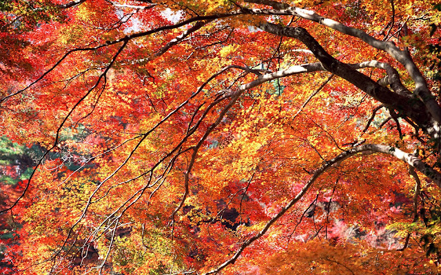 Árboles de Otoño - Autumn Trees