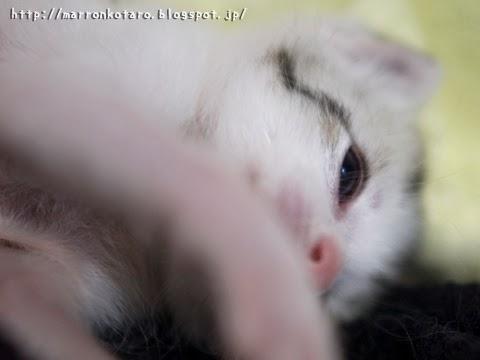 かわいい子猫がごろん