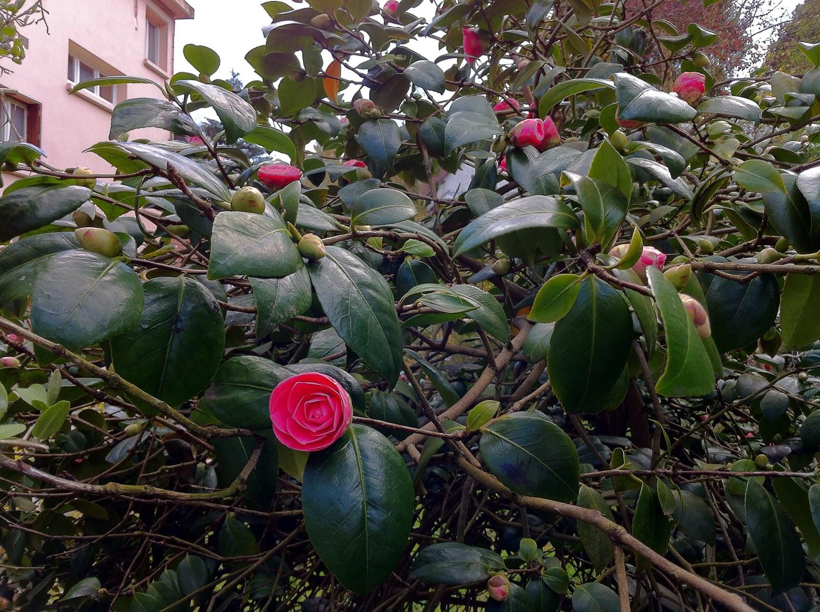 Mon jardin imparfait bois des moutiers vs mont saint aignan for Le jardin imparfait