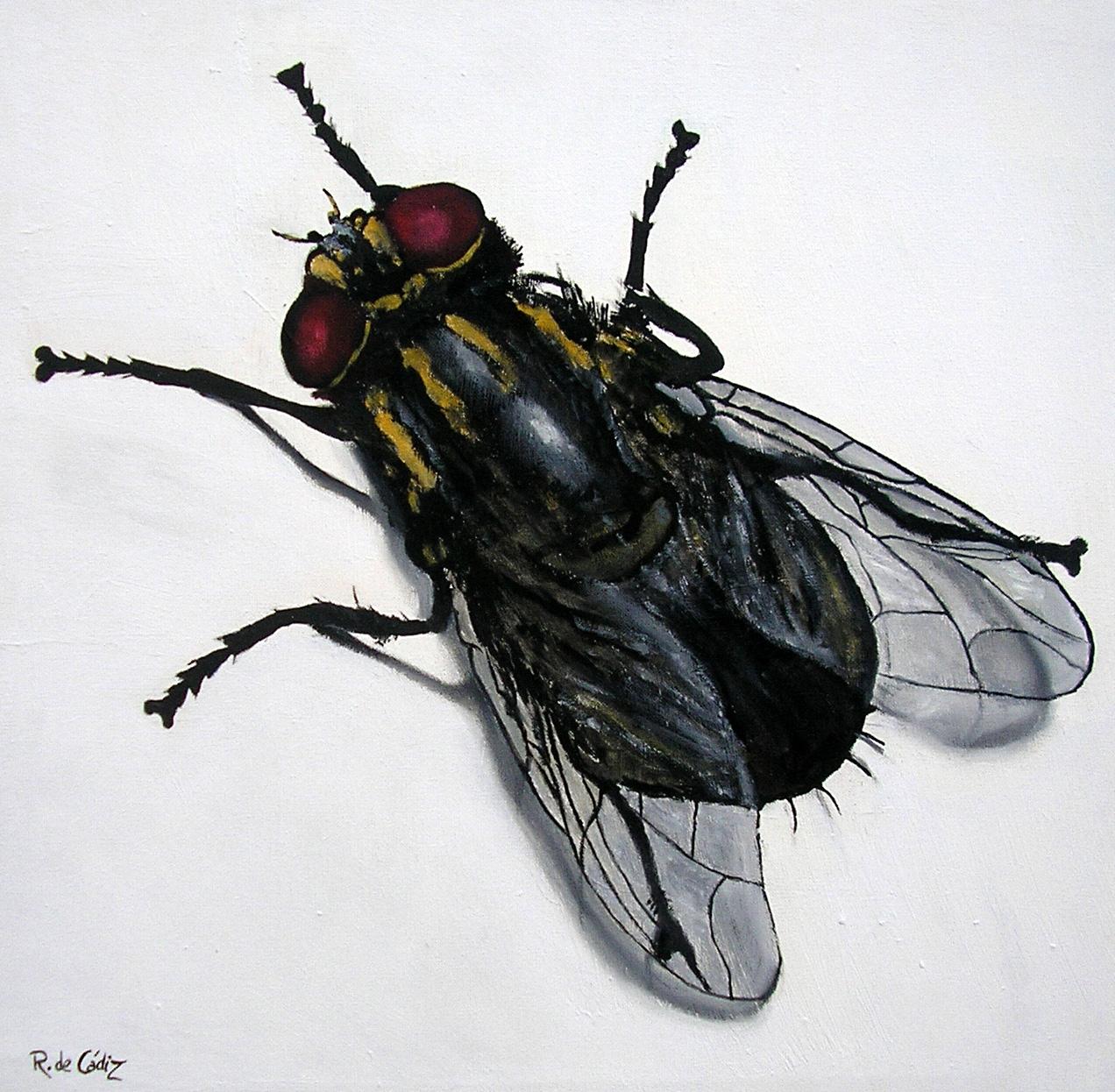 El profesor bigotini sangre de colores y corazones de mosca - Insectos en casa fotos ...