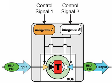 biological computer