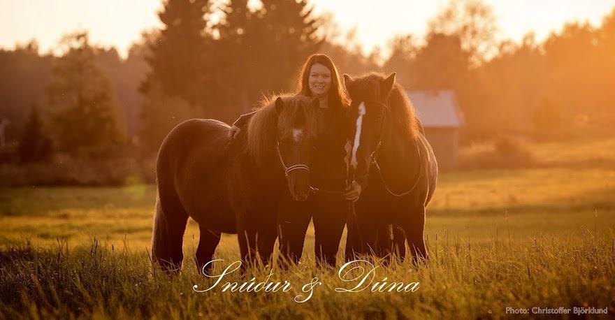 Islandshäst i skärgården