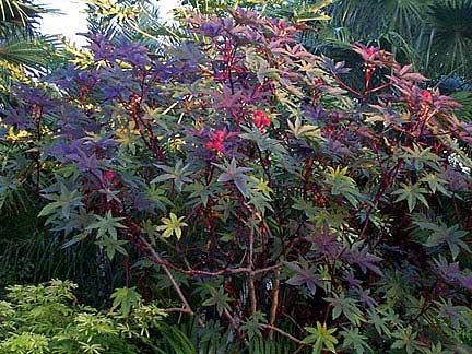 Dangerous Plants, Deadliest Plants