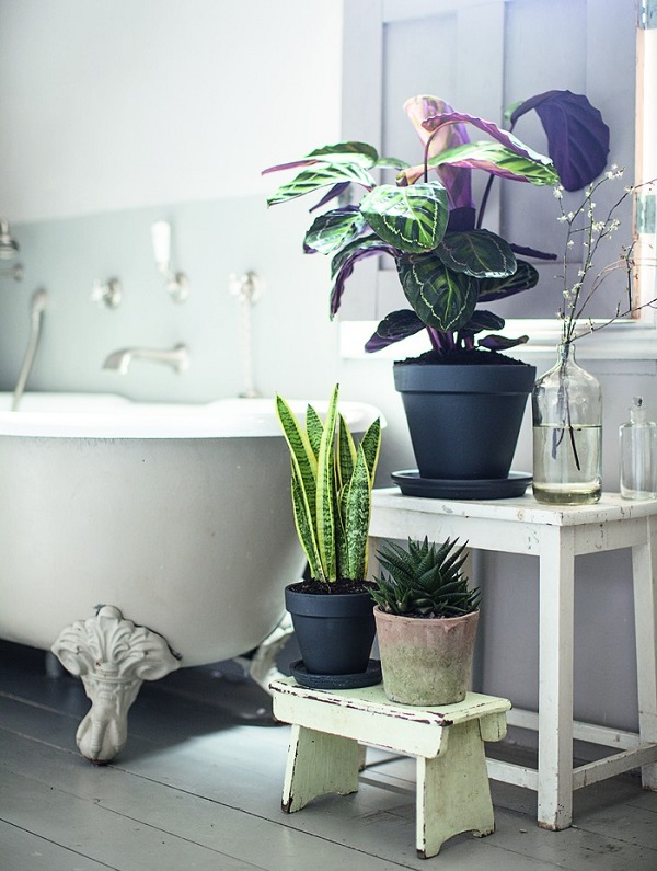 Winter Home Bathroom Plants