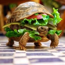 Burger murah, sos burger, pembuatan daging burger, untung bersih burger, lokasi burger, jenama burger, franchise burger