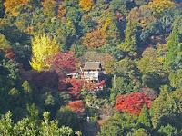 紅葉の千光寺・大悲閣が見下ろせる。