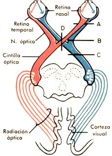 La vía óptica