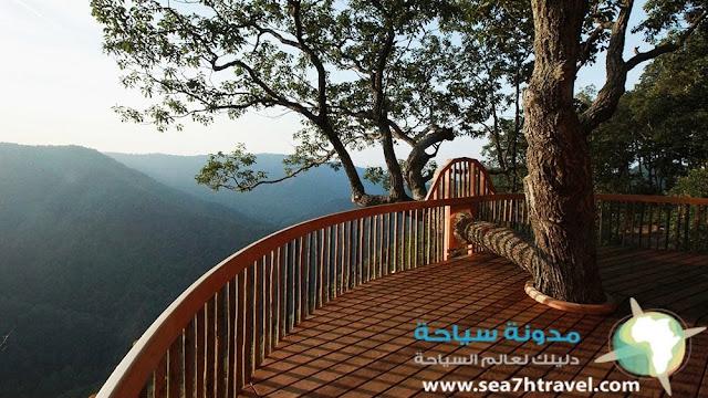 منتجع الشجرة في جزيرة بالي